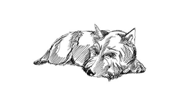 Bonnies Portraits Stecs Scottish Terrier Emergency